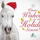Acavallo - Happy Holiday Season