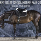 Acavallo at Spoga Horse 2016