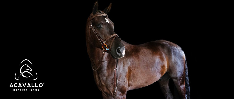 Acavallo Ideas For Horses